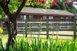Annexe Guest Rooms at Linford Stables B and B Milton Keynes MK17 0RB